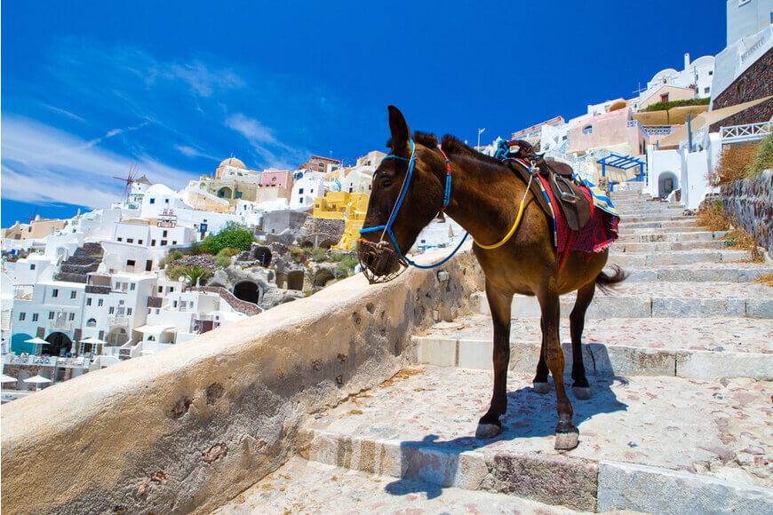 Fira - Donkey Taxis - Kamari Tours Excursions