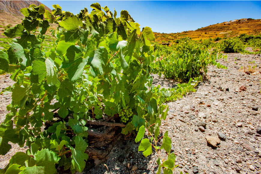 The 7 Best Wineries to Explore in Santorini - Domaine Sigalas - Kamari Tours Excursions
